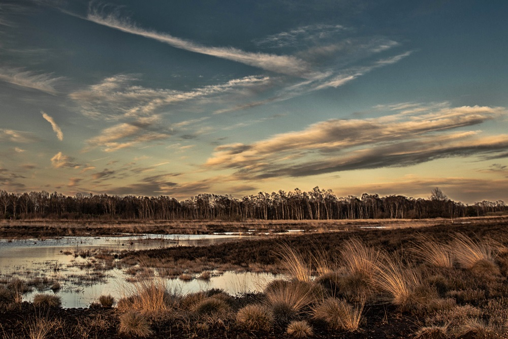 Abendausflug ins Moor...