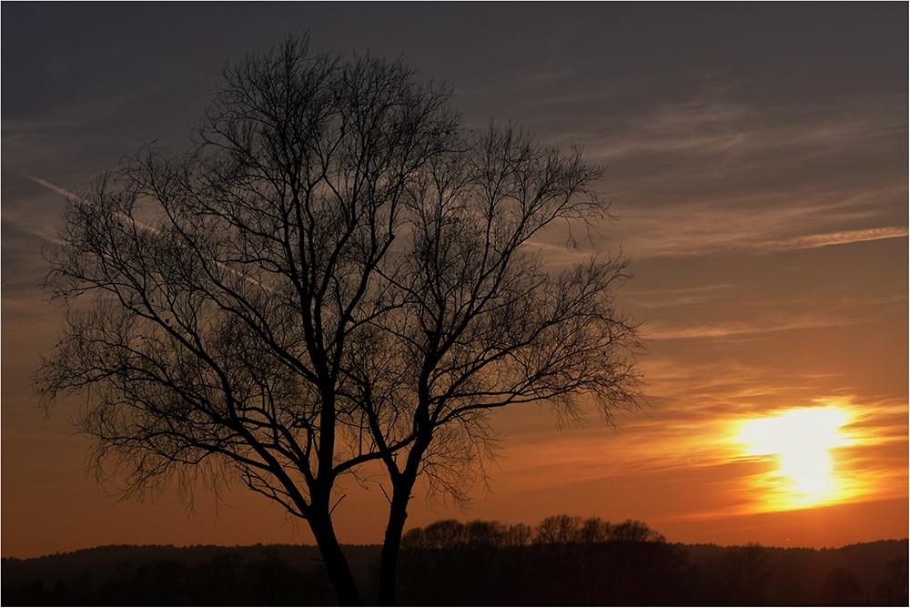 Abendbaum