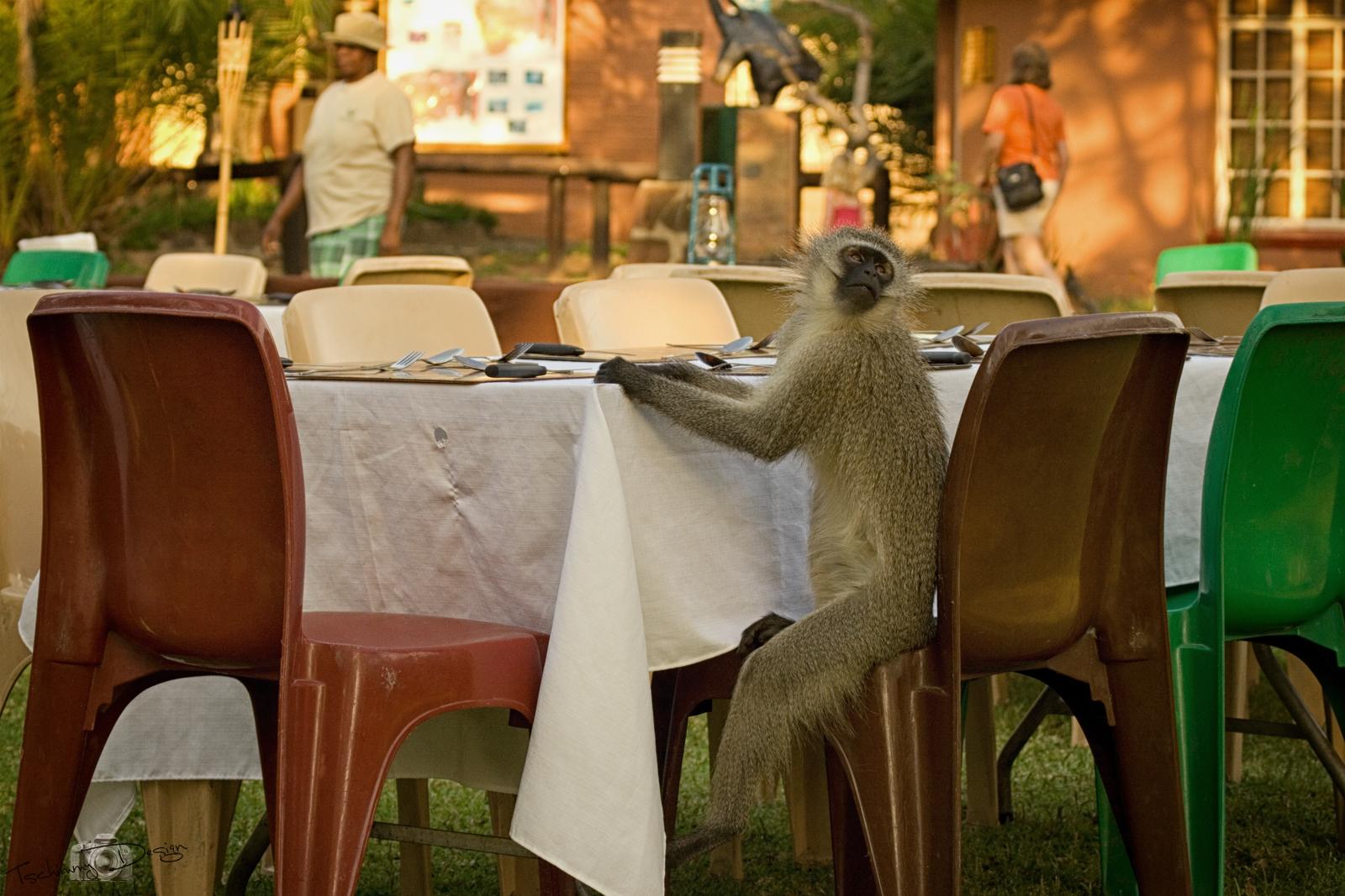 Abendessen im Nationalpark nur für geladene Gäste