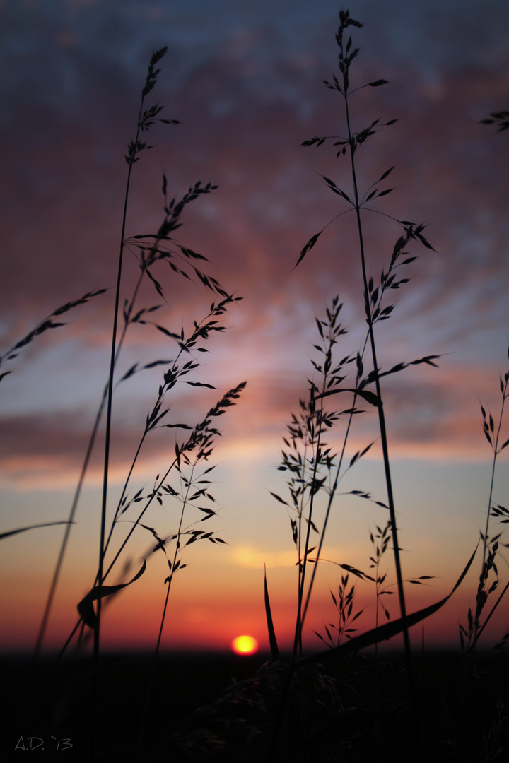 Abendgräser II