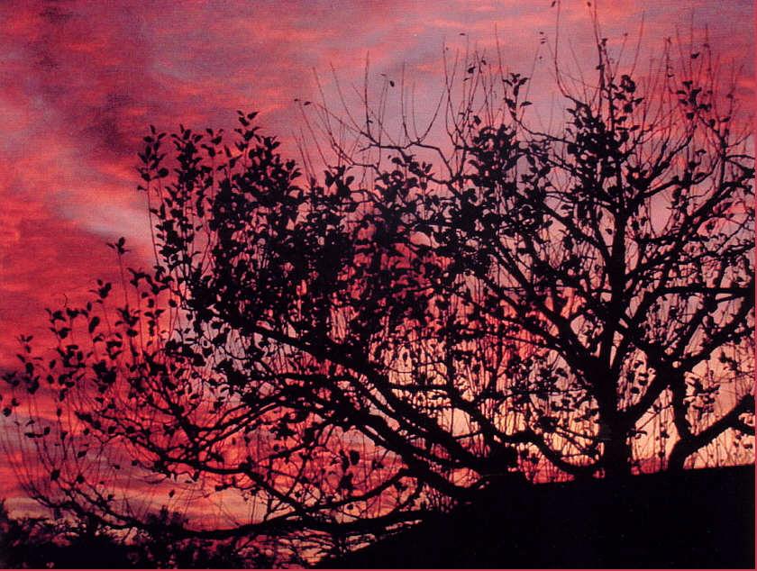 Abendhimmel hinterm Kirschbaum