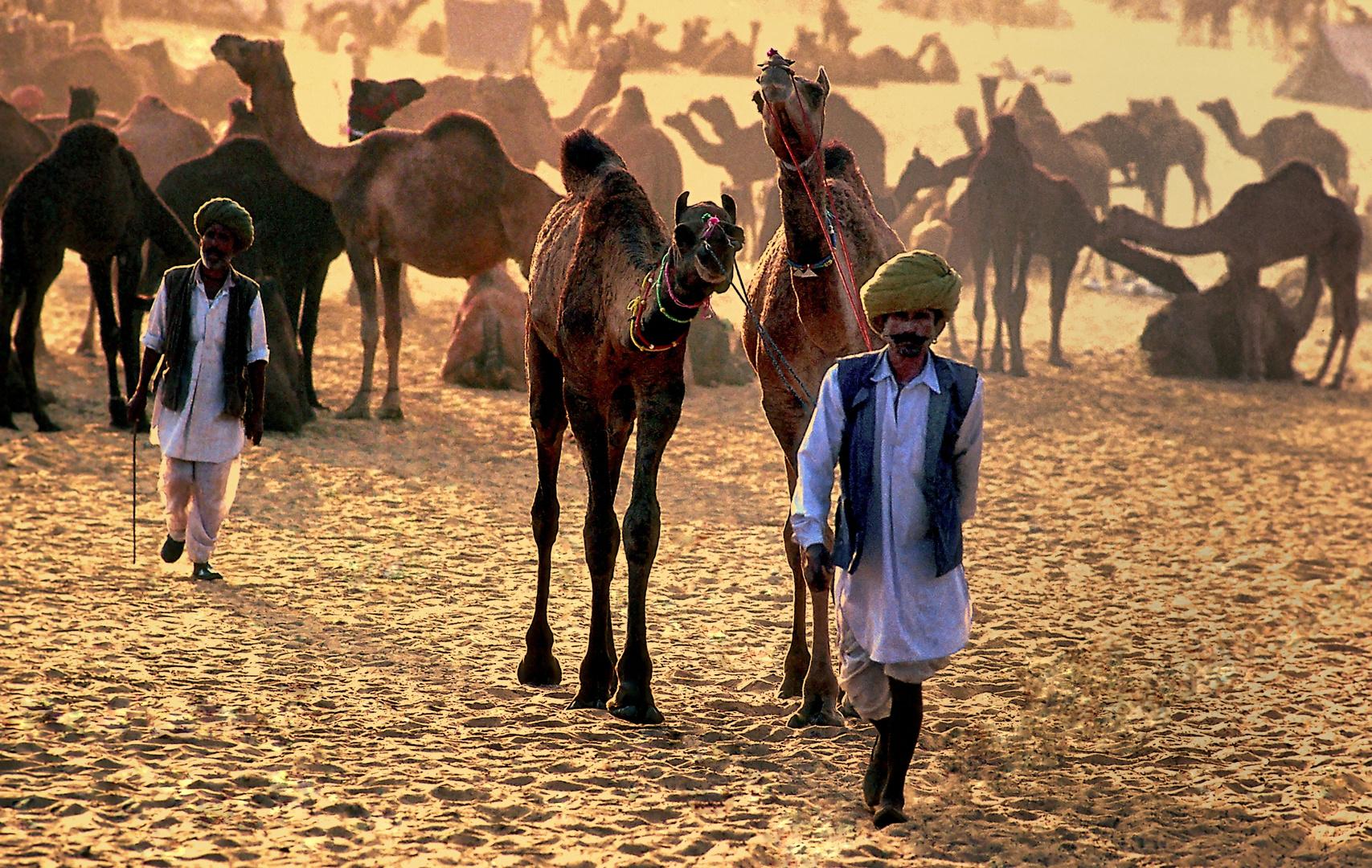 Abendlicher Abzug in die Wüste