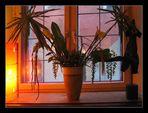 Abendliches Fenster