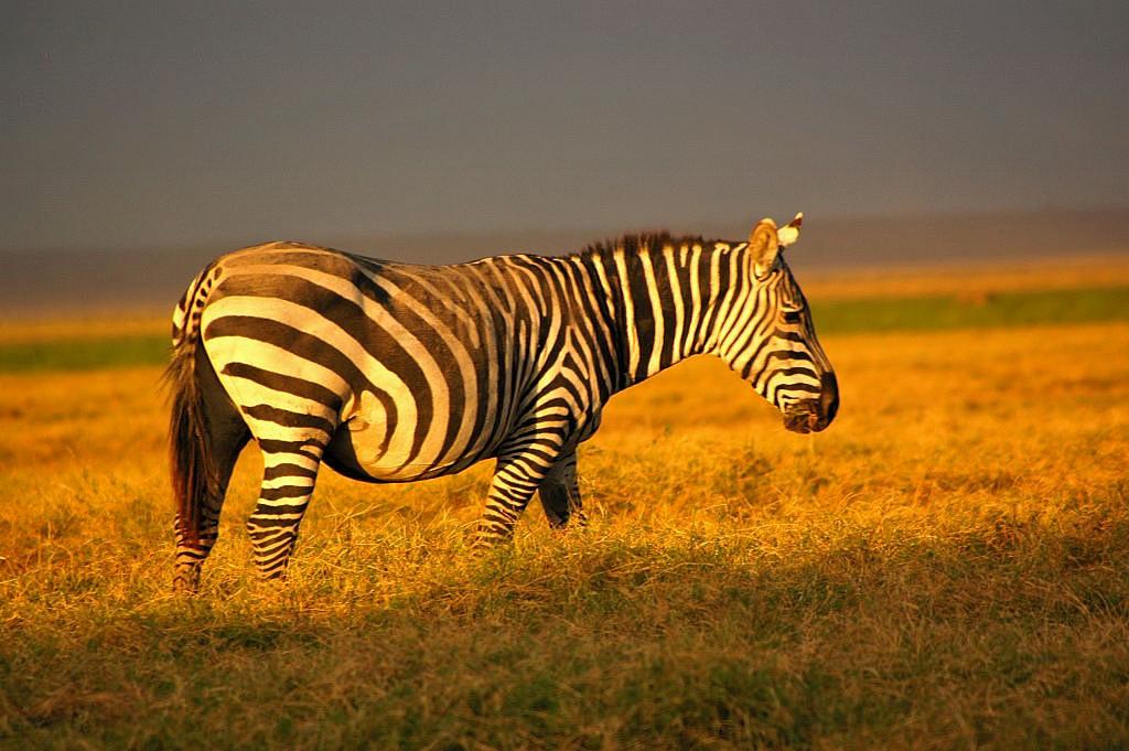 Abendlicht Afrika