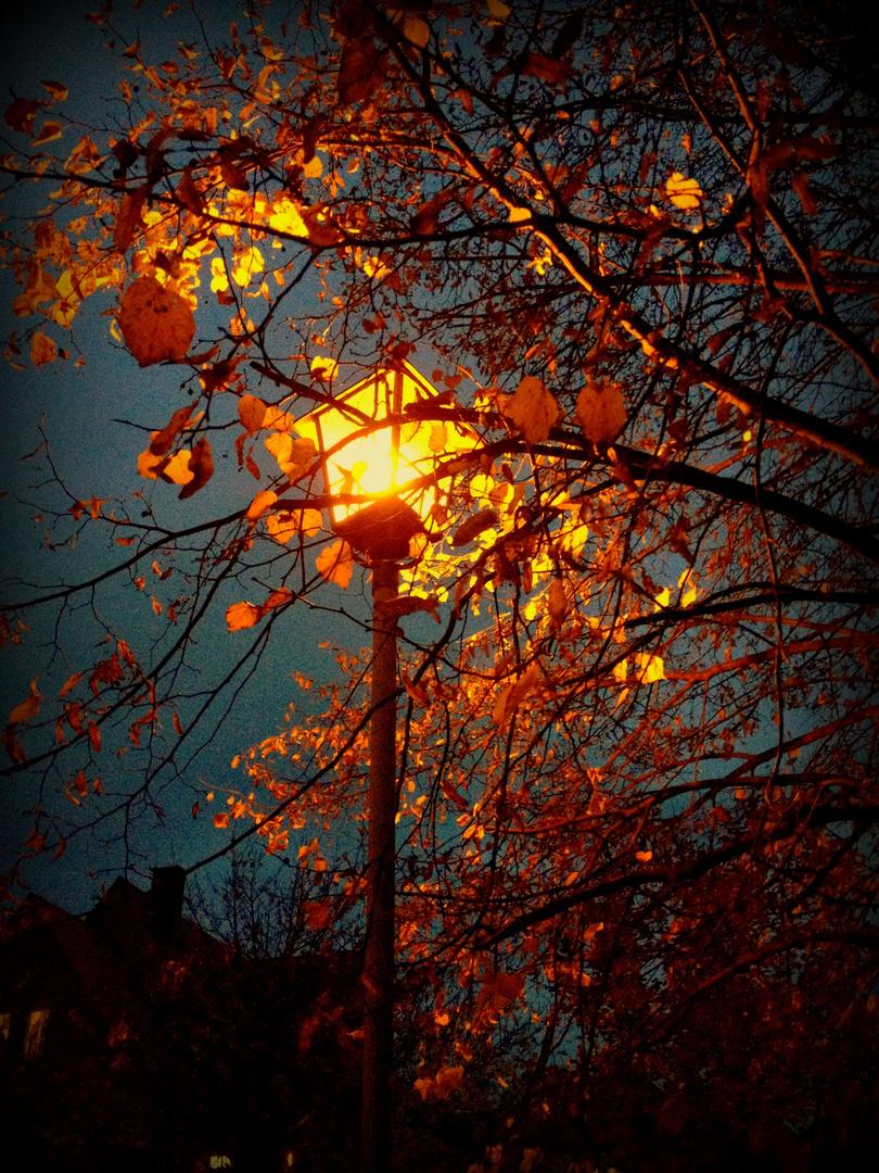 Abendlicht im Herbst