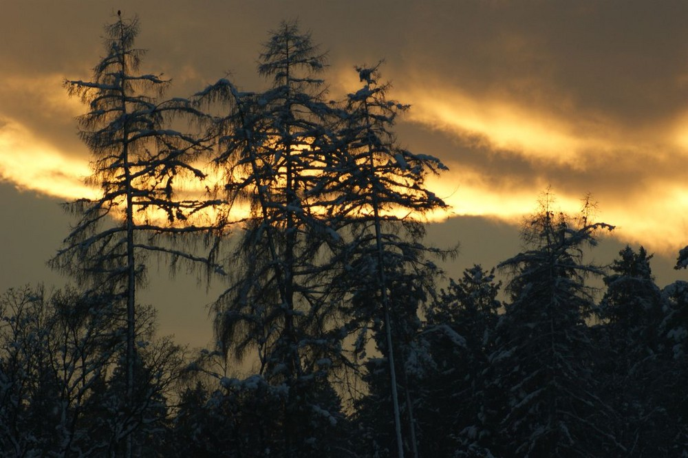 abendrot über den bäumen