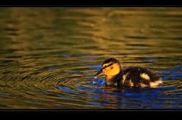 Abend's am Teich