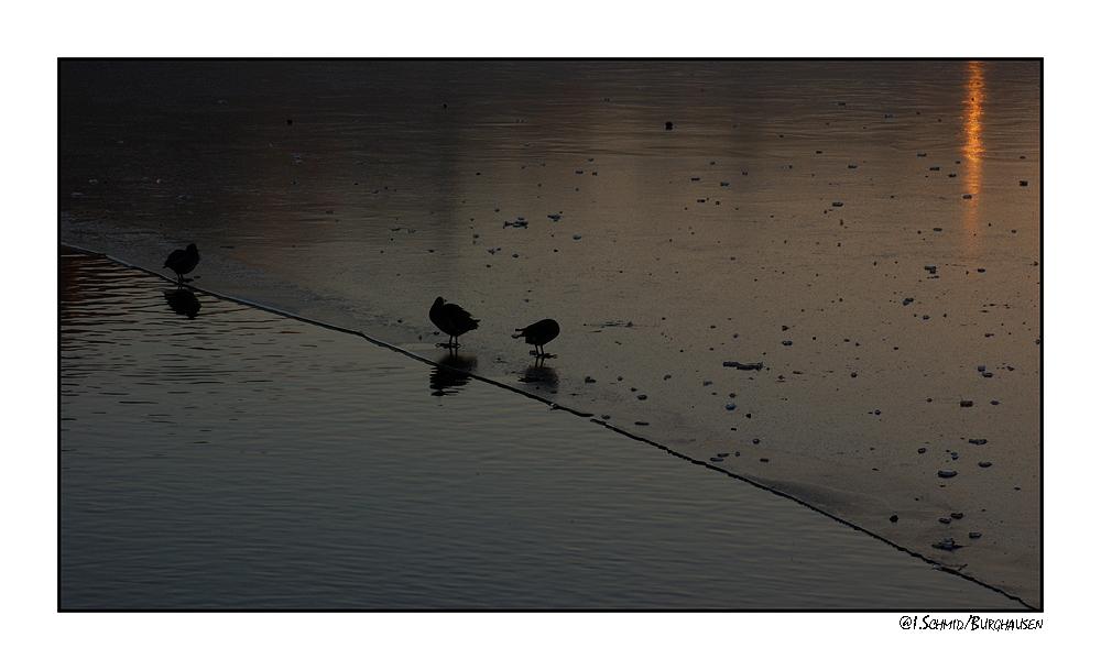 Abends am Wöhrsee