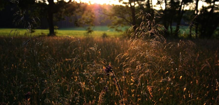Abends auf der Moorwiese