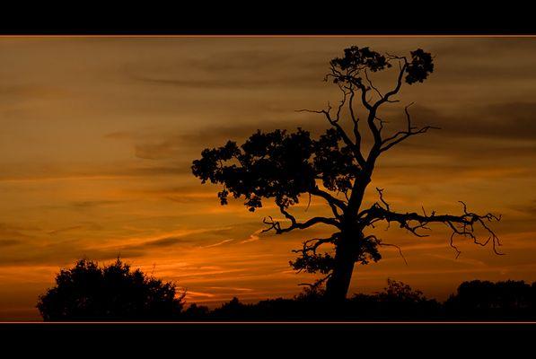 Abends bei meinem Baum... II