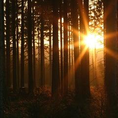 Abends im Wald...