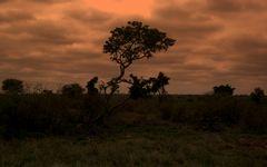 Abends in Südafrika