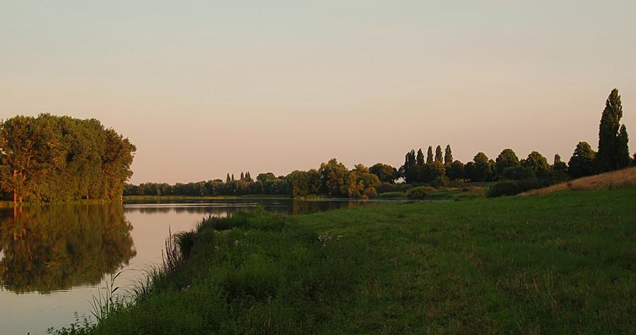 Abendsonne am Altrhein 3