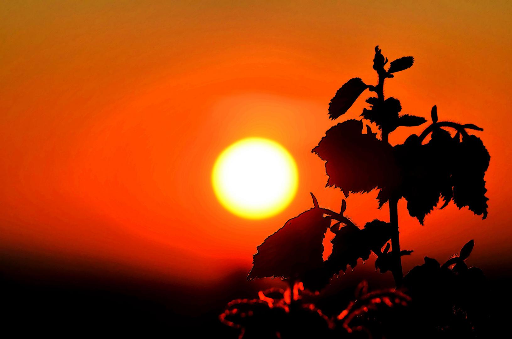 Abendsonne am Horizont