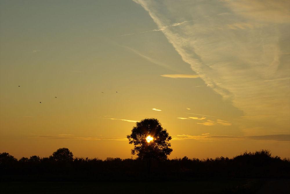 Abendsonne auf dem Land...