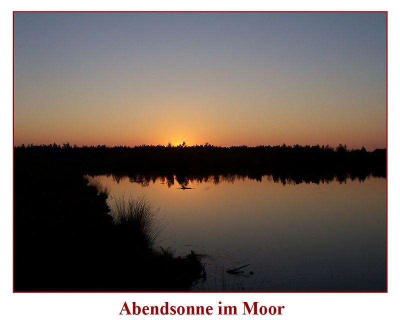 Abendsonne im Moor