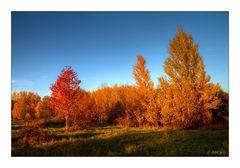 Abendsonne trifft Goldenen Oktober