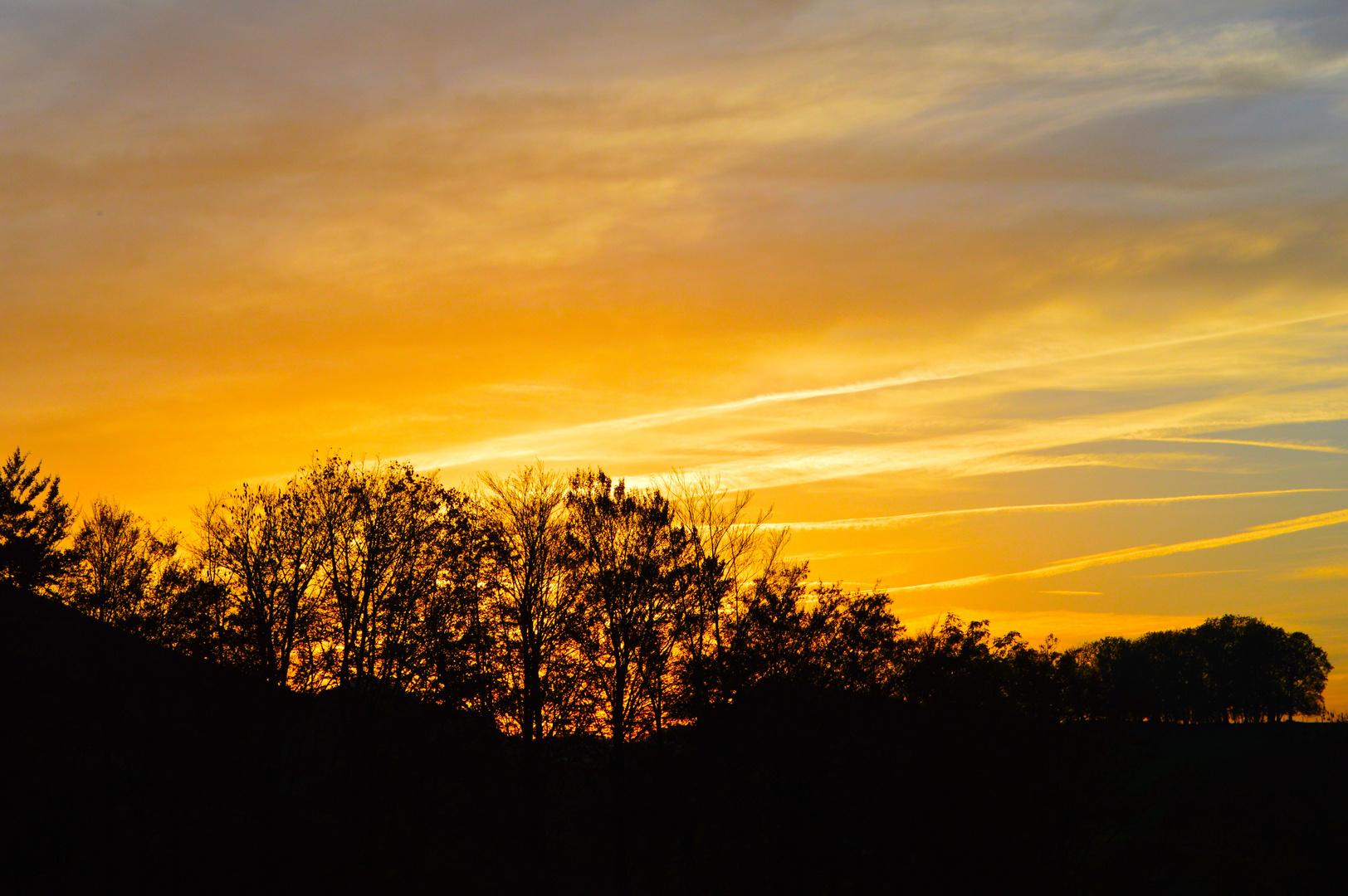 Abendsonne über dem Wald