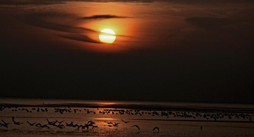 Abendsonne über dem Watt