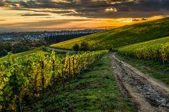 Abendsonne über Kiedrich 83