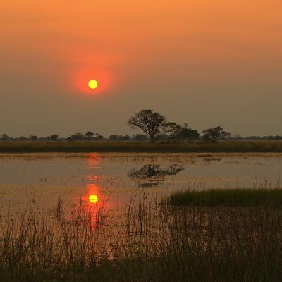 Abendstimmung am Okavango