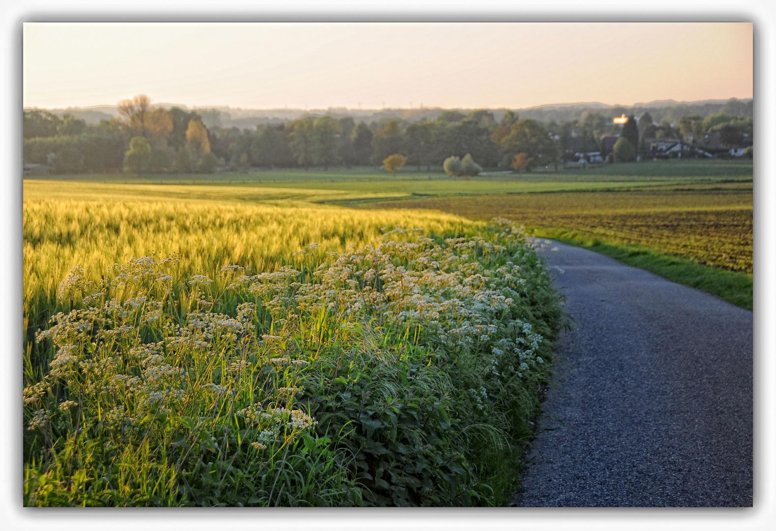 Abendstimmung auf den Feldern