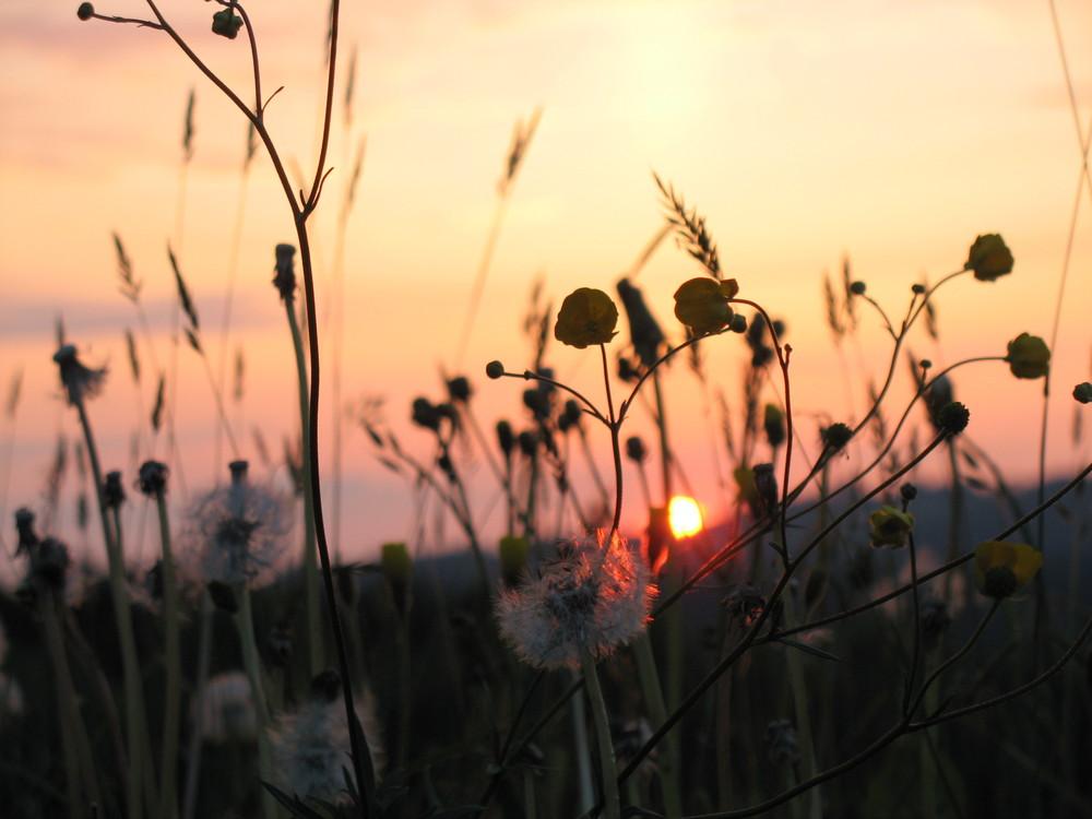 Abendstimmung auf der Frühlingswiese