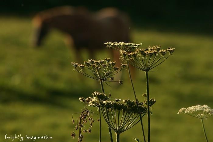 Abendstimmung auf einer Weide