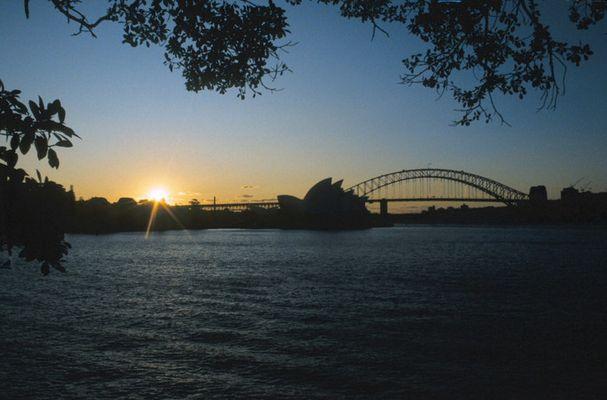 Abendstimmung im Botanischen Garten/Sydney
