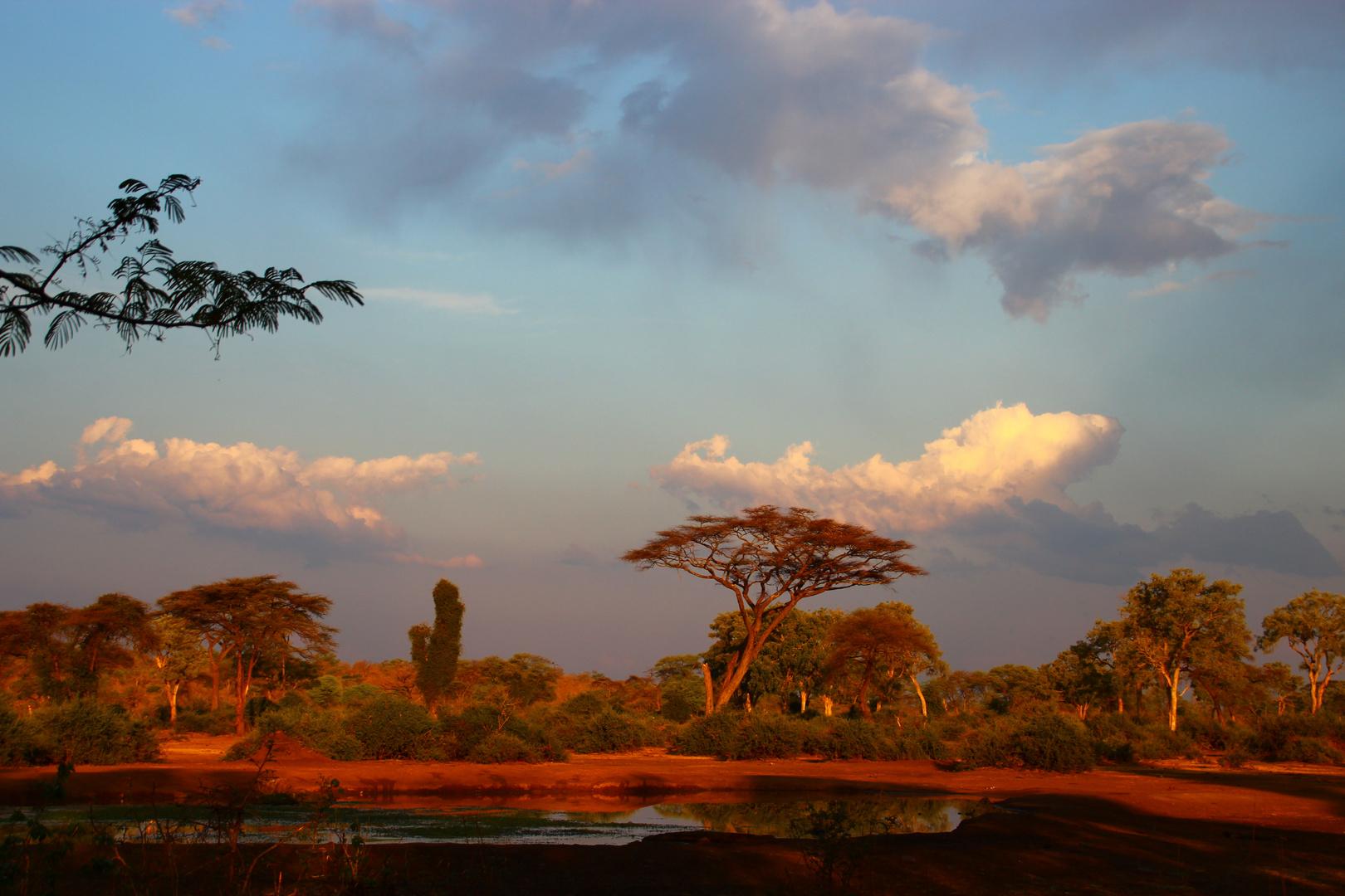 Abendstimmung im Elefant Valley