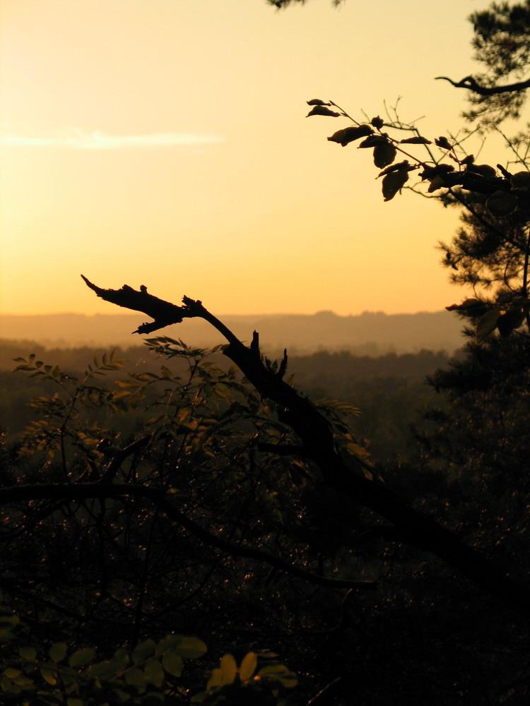 Abendstimmung im Herbstwald