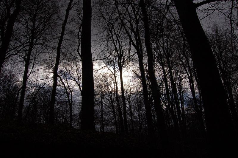 Abendstimmung im Wald