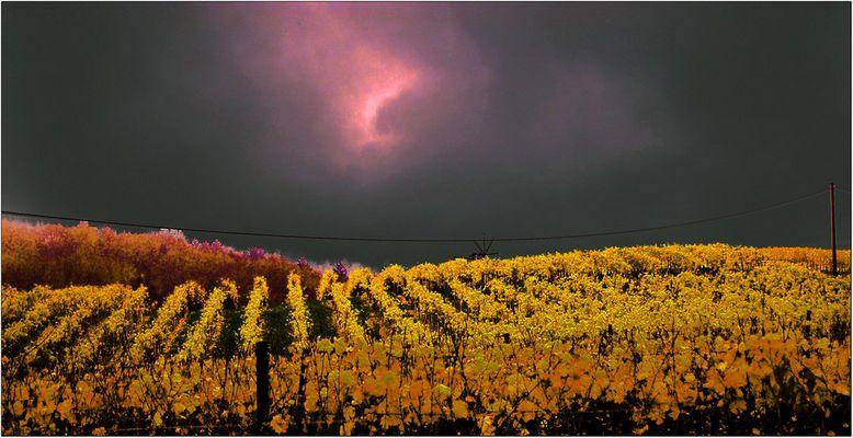 Abendstimmung im Weingarten
