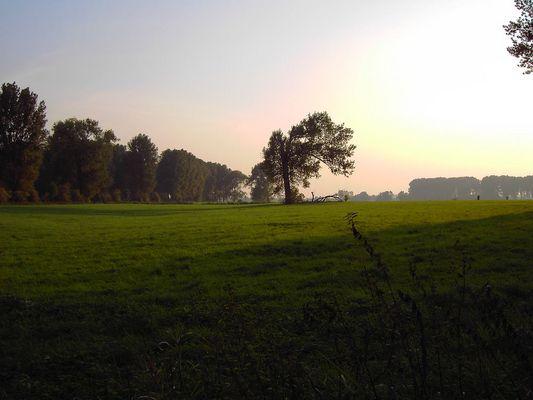 Abendstimmung in den Urdenbacher Kämpen