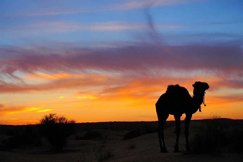 Abendstimmung in der Sahara