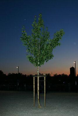 Abendstimmung in Kreuzlingen mit Baum