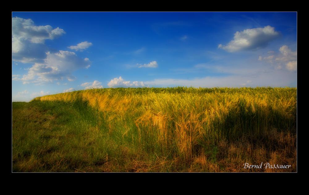 Abendstimmung über dem Getreidefeld