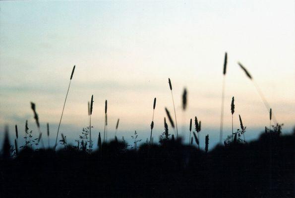 Abendwiese