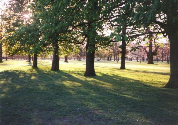 Abenstimmung im Hyde Park