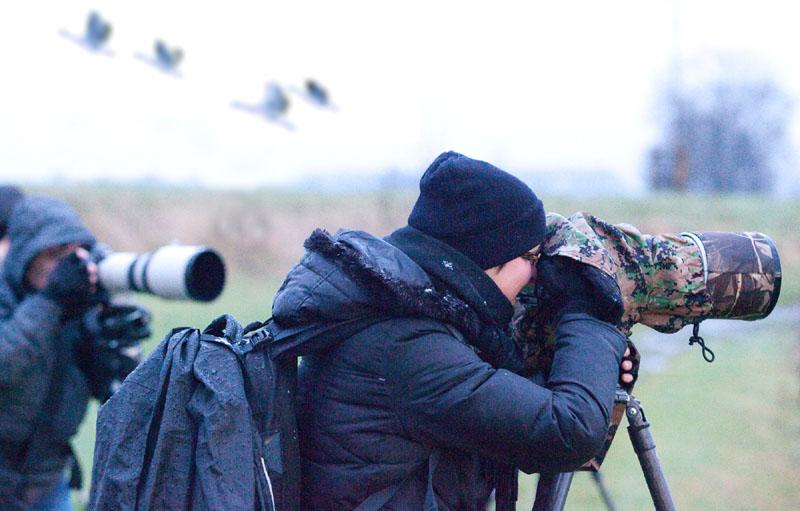 Abenteuer Niederrhein - Wildgänse Fotoexkursion