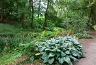 Aberglasney House and Gardens IV
