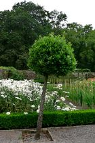 Aberglasney House and Gardens VI