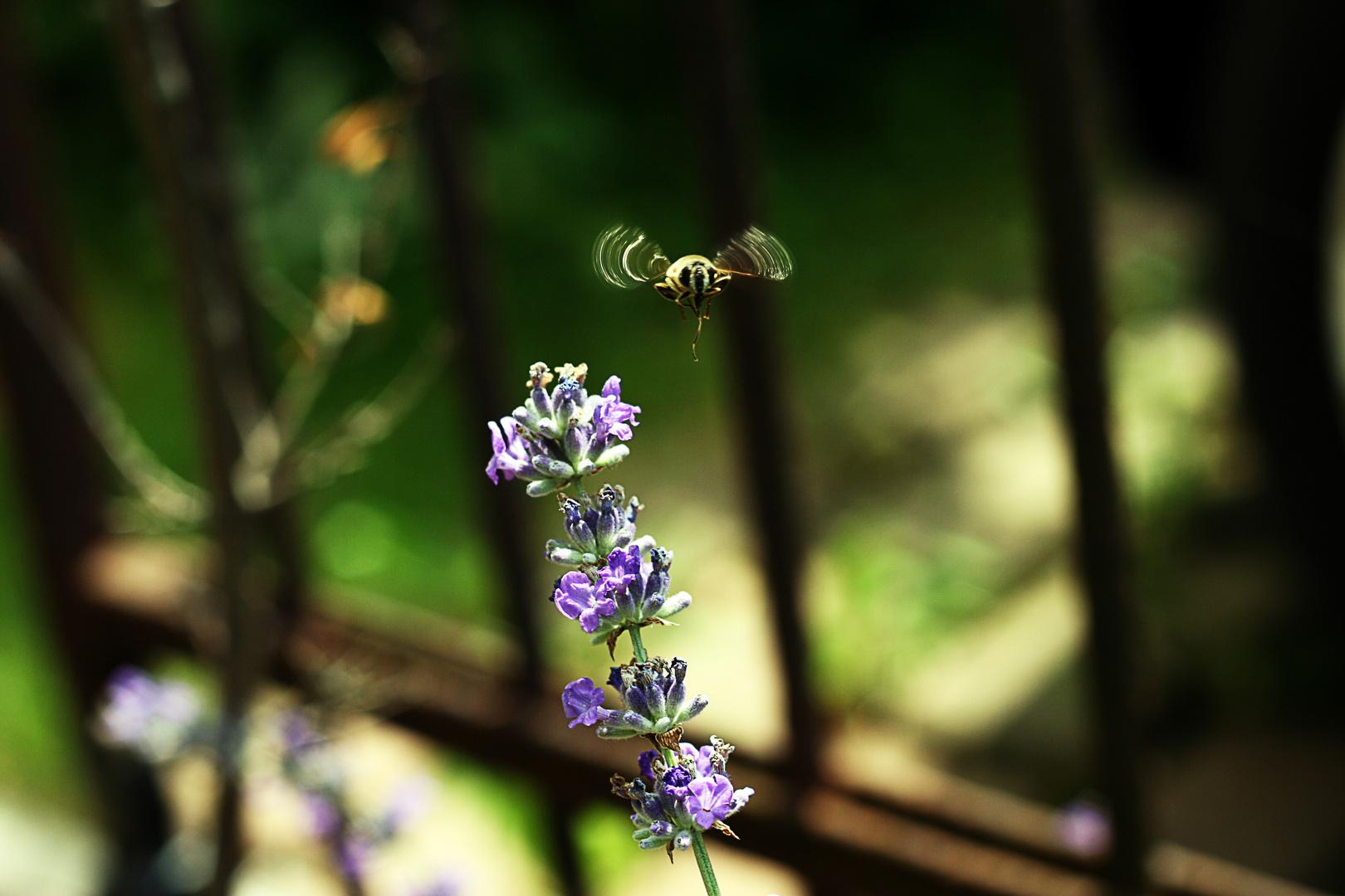 Abflug einer Biene