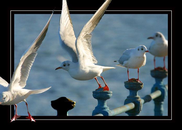 Abflug | Fly-Away