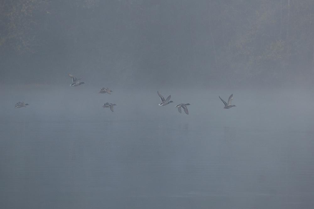 Abflug im Nebel