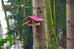 Abflug vom Vogelhaus