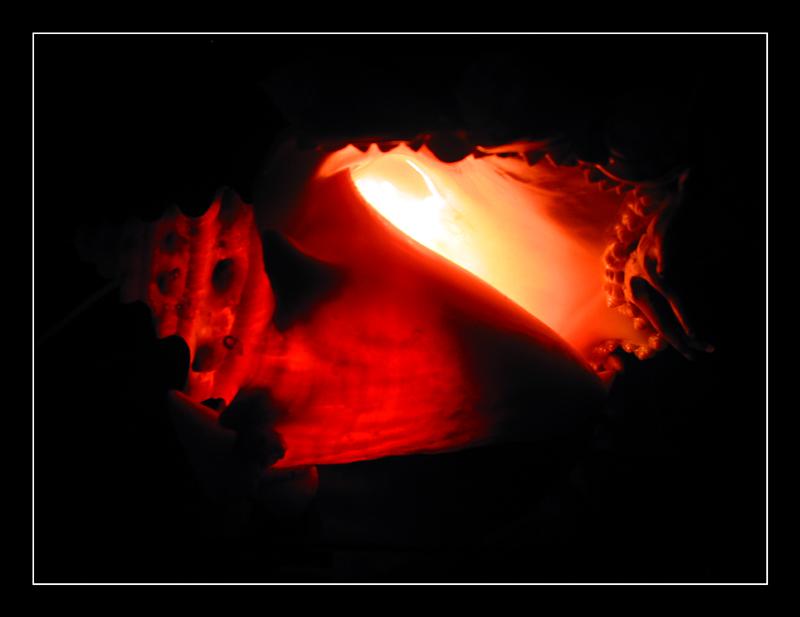 abfotografiert - Muschellampe