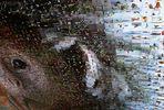 Abfotografiertes Mosaik