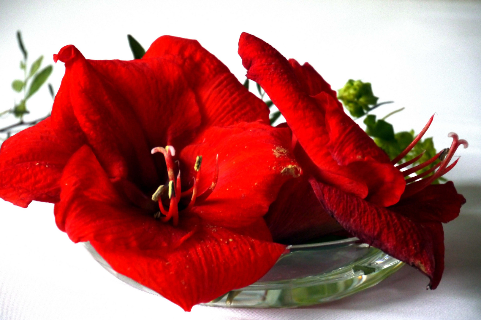Abgefallene Amaryllisblüten.