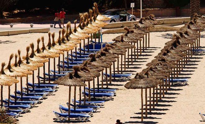 Abgekaute Fischgreten am Strand?